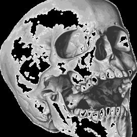 Archeologia - czaszka
